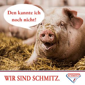 Die besten Sprüche und interessantesten Fakten rund um Schweine 10