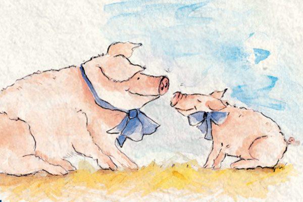 Schmitz_Illustration-Schwein_08